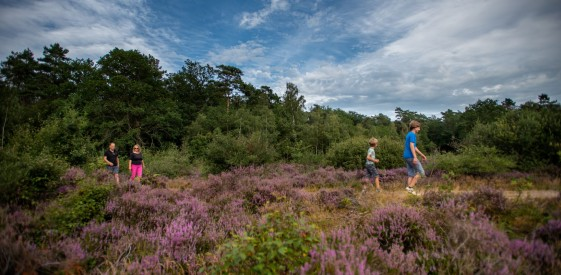 Walking routes in Westerveld, Drenthe